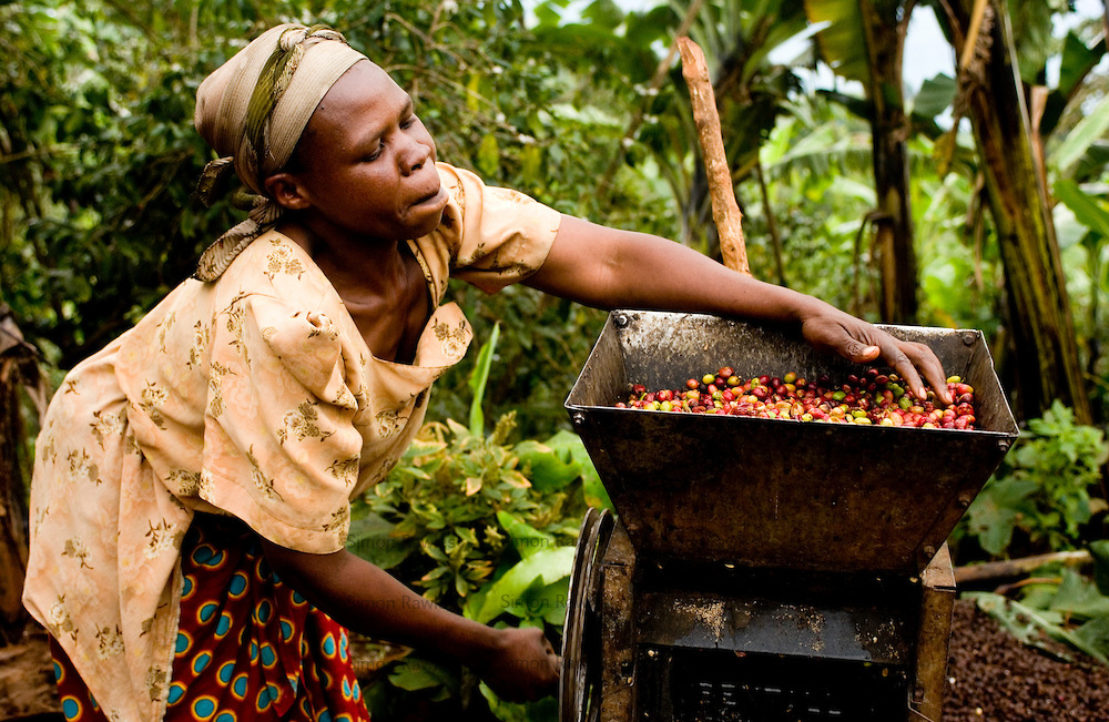 Ongoing droughts adversely affects Uganda coffee exports ...