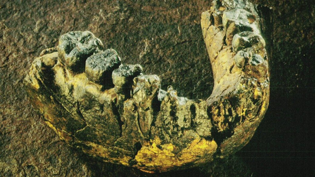 A two and a half million old hominid jaw bone found in Malawi.