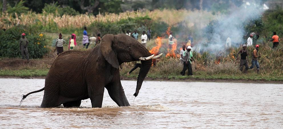 These animals, once able to run free in wide-open land, were now being squeezed into a handful of game reserves and national parks. Many became extinct, others never to be the same again. Image courtesy: Baraka FM