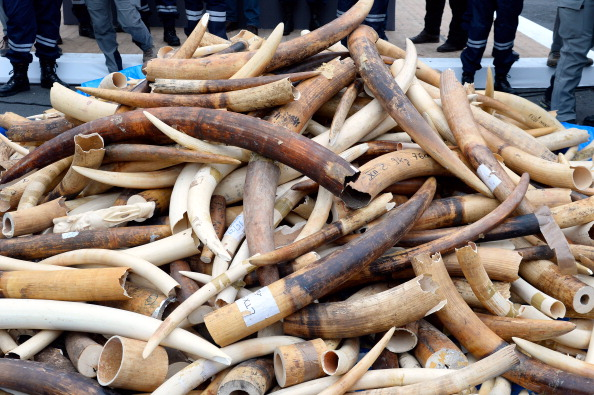 'Europe's ivory laws are broken,' say campaigners