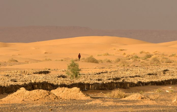 The Sahara series has won the first prize for the best documentary of 2017 China Television Quality Award (Golden Sail Award)