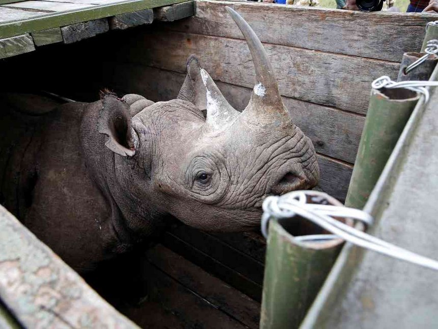 8 endangered black rhinos die in Kenya in botched relocation