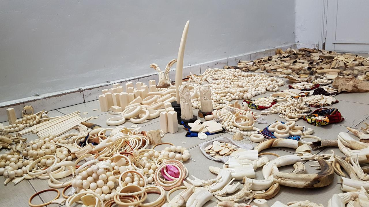 Illegal ivory found on sale in 10 European countries
