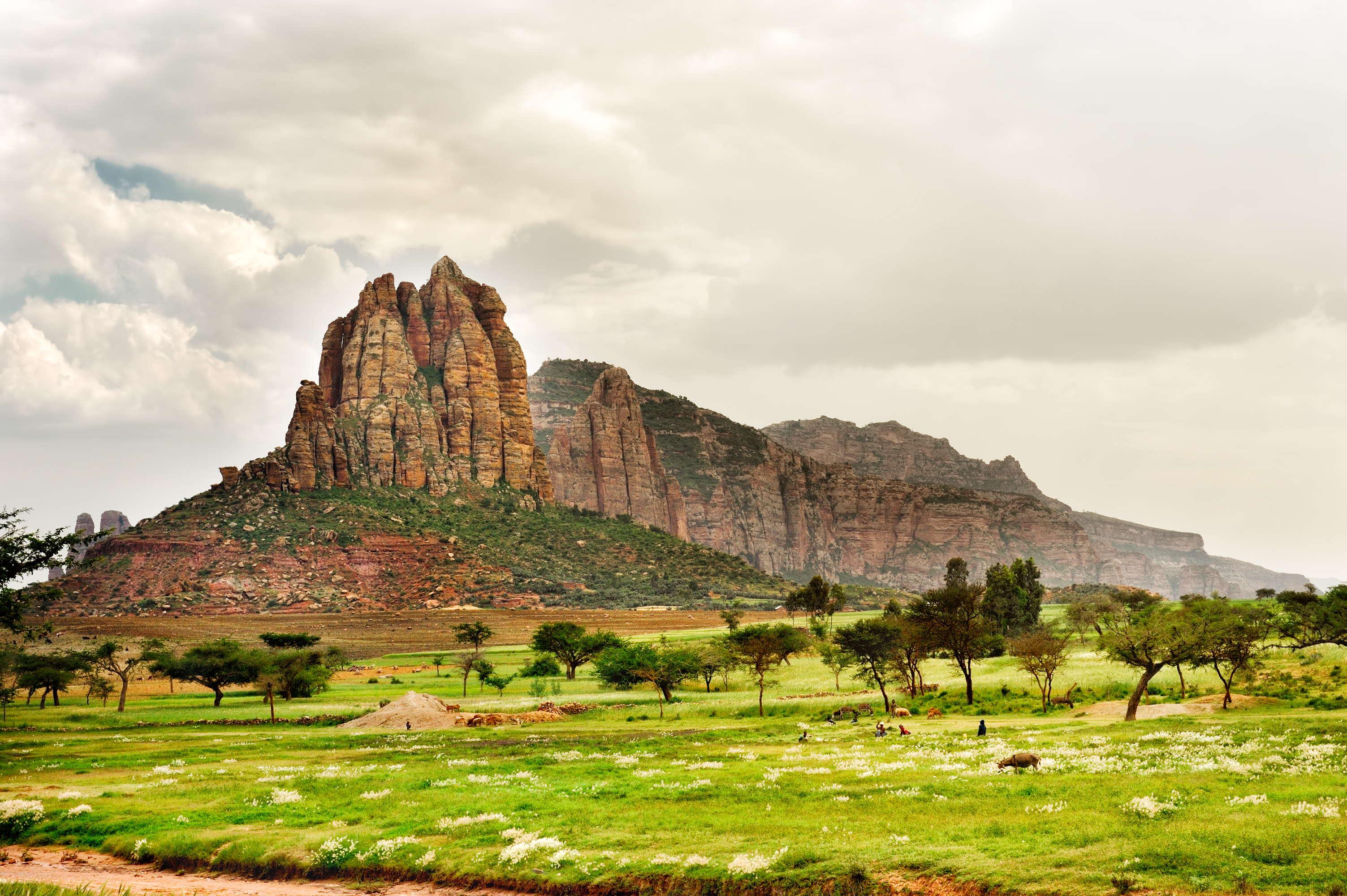 Ethiopia attempts to break record by planting 200 million trees in a