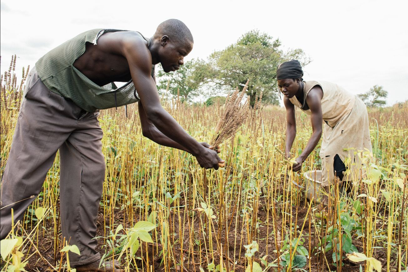 For others, most notably living in the rural lands of Uganda, chia is the seed for survival. Image courtesy: Mercy Corps