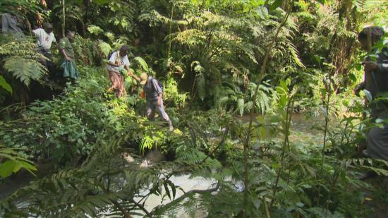 Bwindi forest thicket, at the far off Gladys and her team crossing a water stream. They are tracking gorillas.