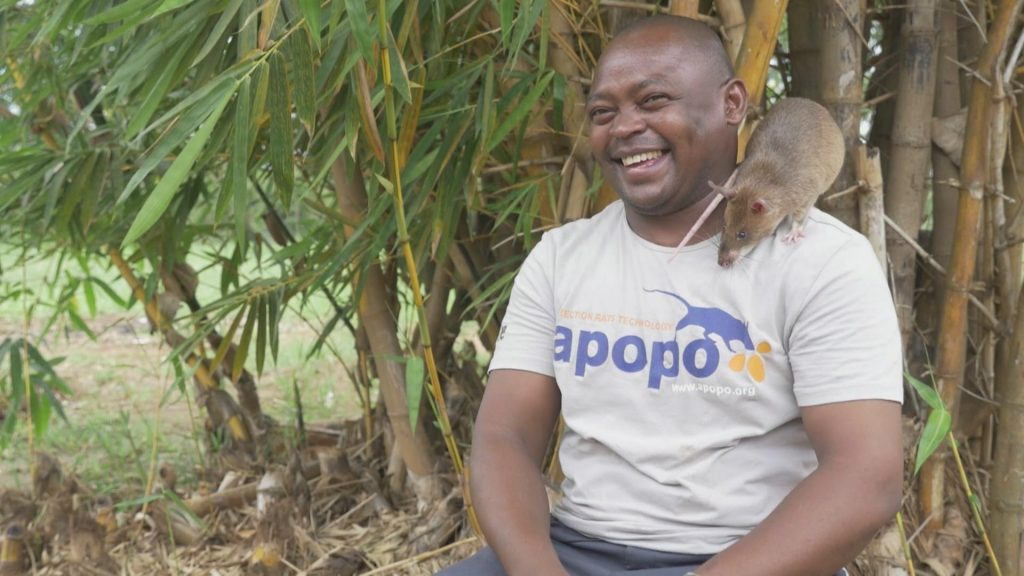 Fidelis with one of the Hero rats. He works for APOPO, a non profit organization in Tanzania that trains rats on detecting landmines and tuberculosis.