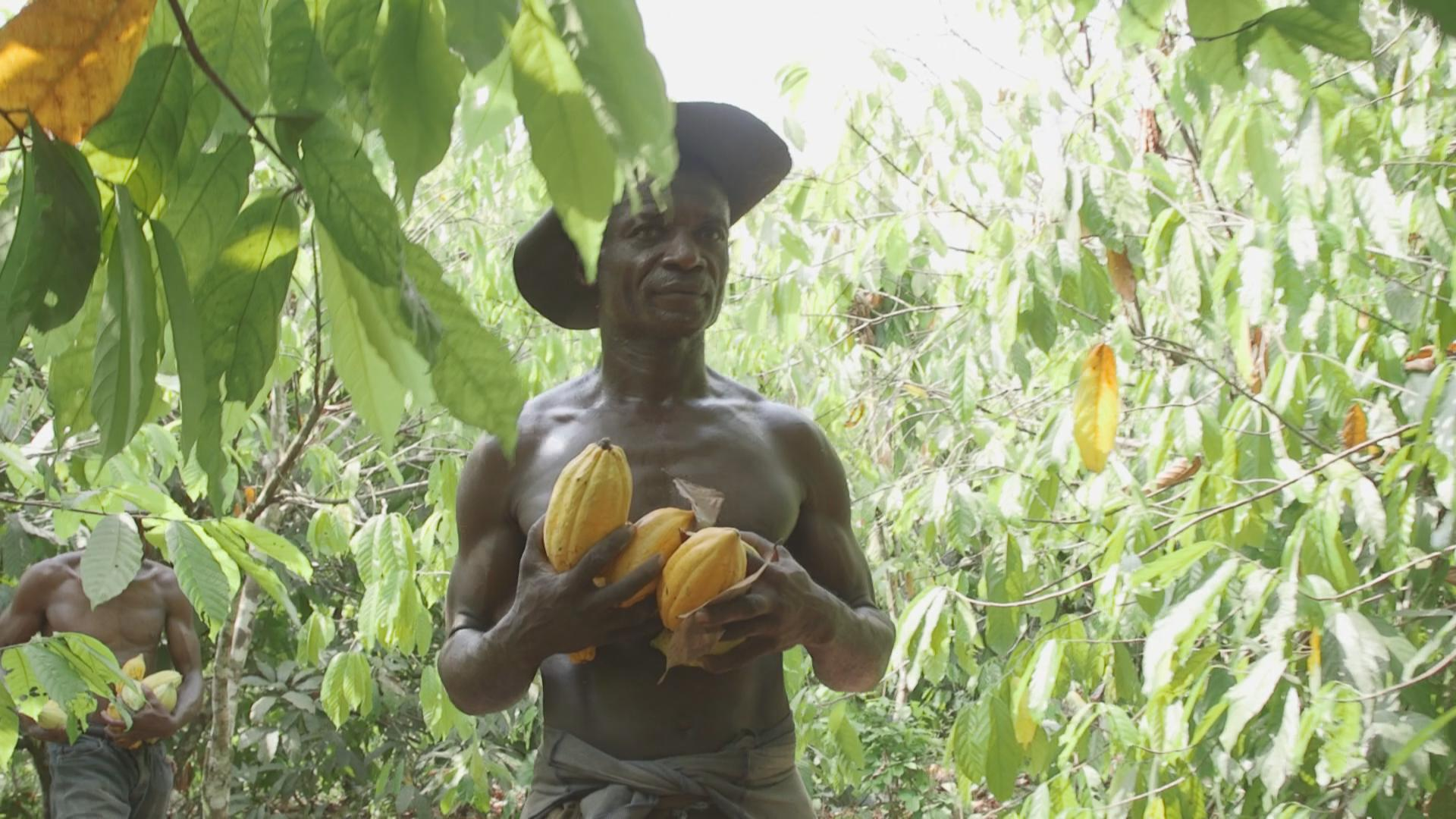Thomas Ake in his farm. He is a cacao farmer in Cote d'Ivoire.