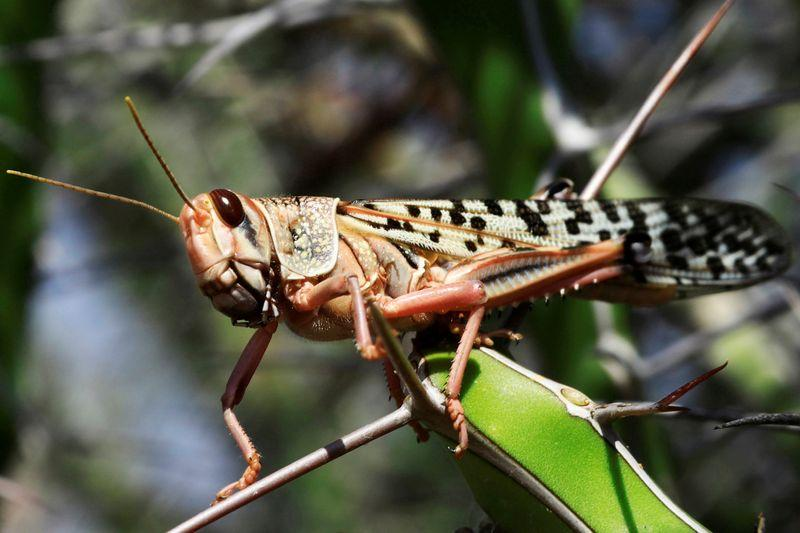 """""""Swarms big as cities"""": UN chief says locust fight must intensify"""